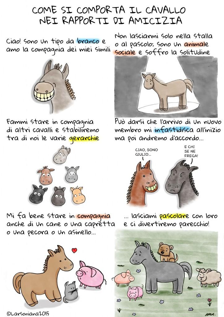 cavalli amicizia