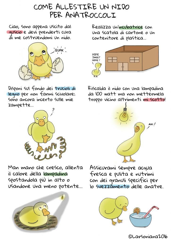 anatroccoli nido