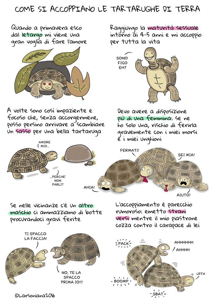 accoppiamento tartarughe