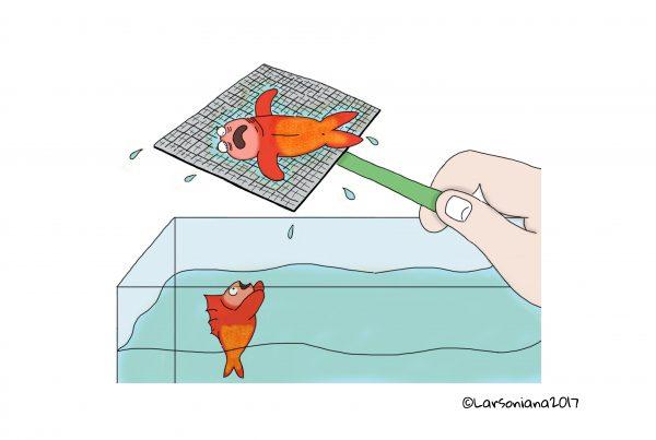 anteprima cambio acqua